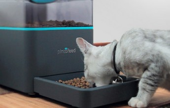 Pintofeed : un gadget pour animal de compagnie